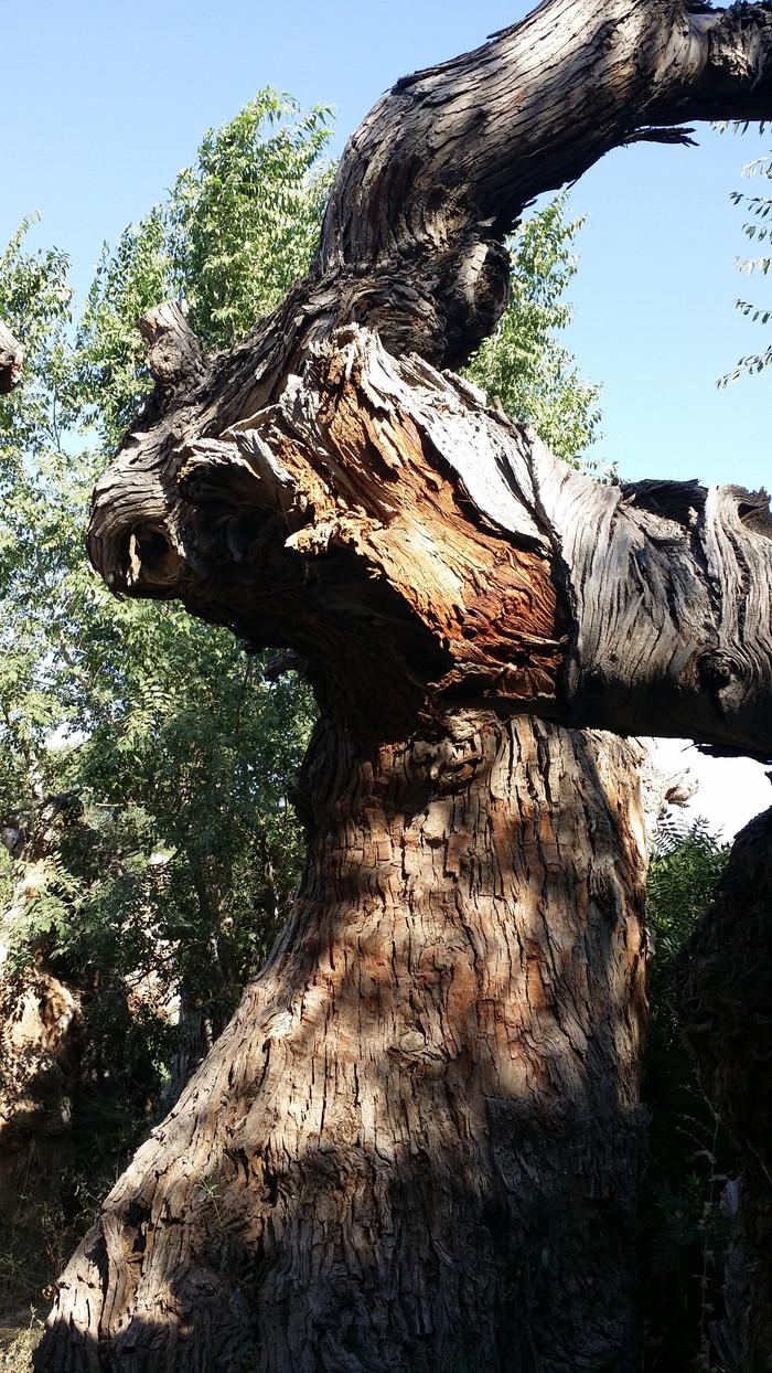 另一大景观是沙漠胡杨林,由2600多棵形态各异的胡杨枯木形成.