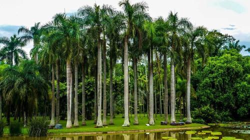 勐仑植物园