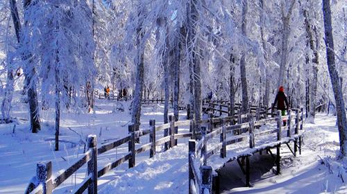 梦中雪世界-哈尔滨-二浪河冰雪画廊-最美雪乡-激情亚布力-哈尔滨5