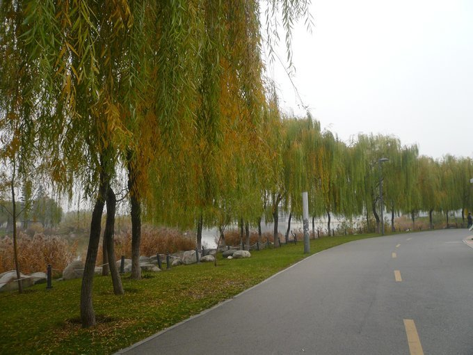 壁纸 垂柳 电脑 风景 风景壁纸 柳树 摄影 树 桌面 680_510