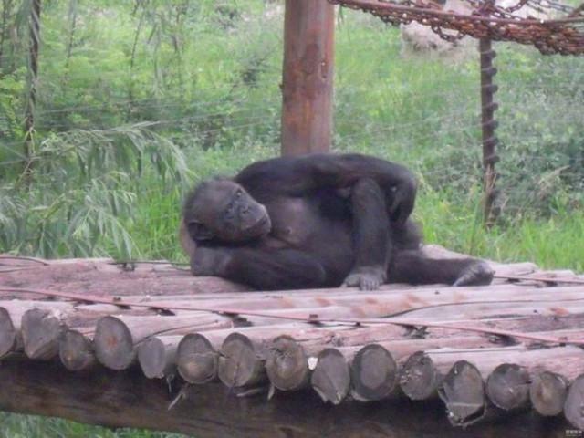 河北最大的动物园:石家庄动物园