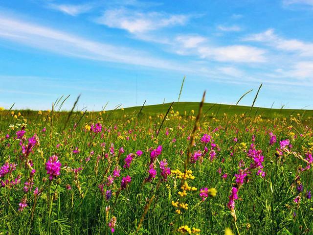 草原碧野繁花图片