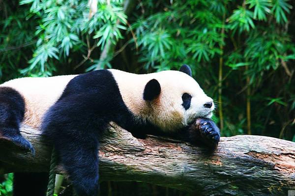 公园以大规模野生动物种群放养和自驾车观赏为特色,集动、植物的保护、研究、旅游观赏、科普教育为一体,拥有华南地区亚热带雨林大面积原始生态;拥有50只澳洲国宝考拉、10只中国国宝大熊猫、马来西亚黄猩猩、泰国亚洲象、洪都拉斯食蚁兽等世界各国国宝在内的500余种20,000余只珍奇动物;拥有全国首创的自驾车看动物模式,拥有大象剧场,西游记剧场,白虎表演,非洲动物表演为主的四大动物表演及各类动物表演。