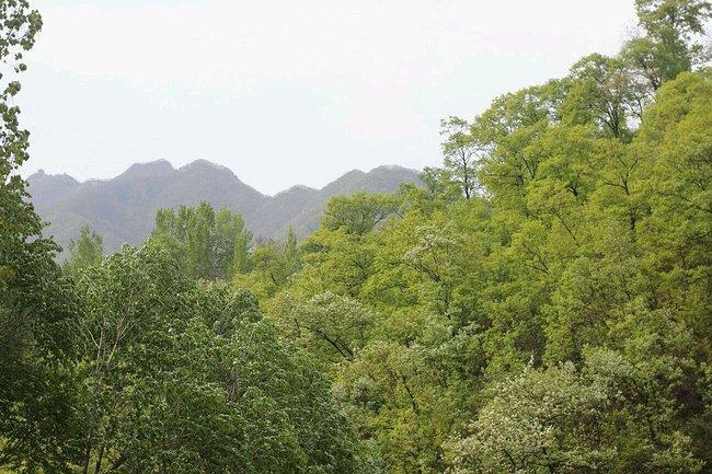 """国家级重点风景名胜区,国家aaaa级风景区,又称""""天坛山"""",主峰之巅有石"""