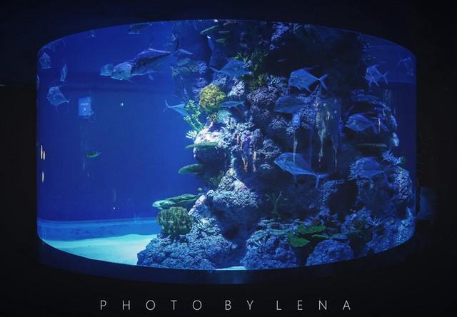 圆柱形的水族箱是最最好看的,鱼儿就绕着水族箱中间的珊瑚