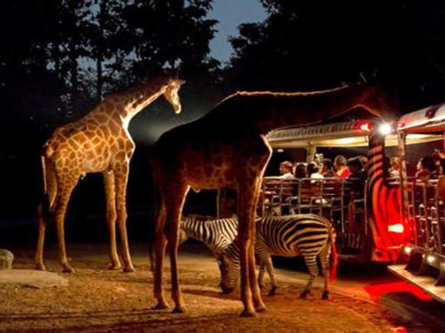 新加坡4晚5日包团定制游>亲子特推,日间动物园,夜间动物园,河川生态