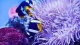 富国海底世界3