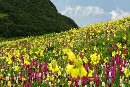 高山花海,含九鼎山门票 徒步贴近大自然,草原骑马,高原野餐,花海露营