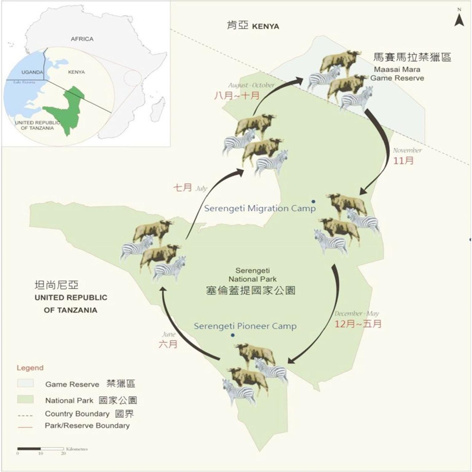 每年的6月是非洲动物们的哺乳期,这个时候,大量的小角马会诞生在迁徙