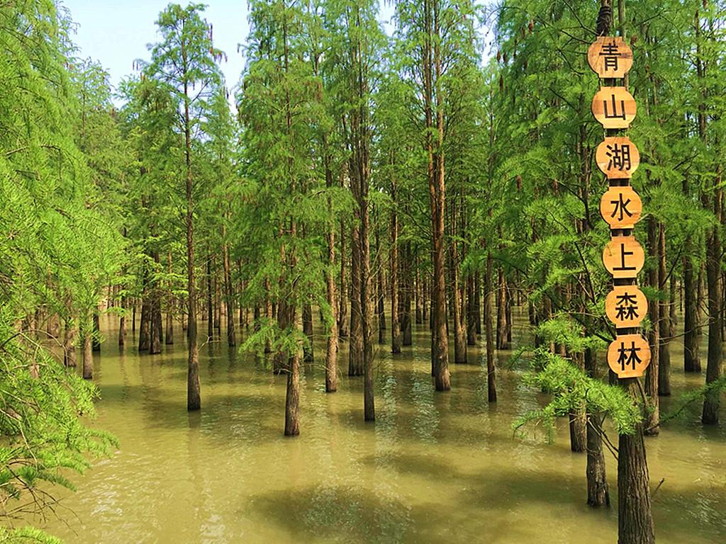 亲子-浙江临安-香格里大酒店-自驾2日游>青山湖水上森林公园/太湖源图片
