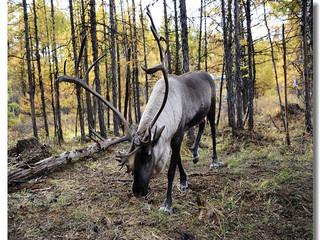 <内蒙古亲子草原5晚6日游>呼伦贝尔大草原、蒙古驯鹿部落、亚洲第一湿地、满洲里口岸