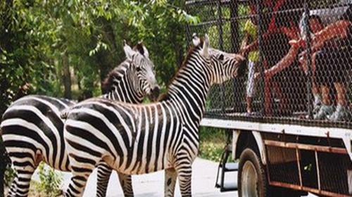 北京大兴野生植物园1日游
