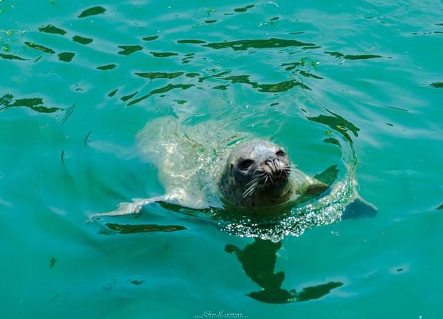 最吸引我的就是海边的动物世界了,特别喜欢海洋
