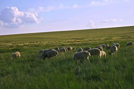 <呼和浩特-希拉穆仁草1日游>含3个景点骑马,全程无购物,内蒙古大草原