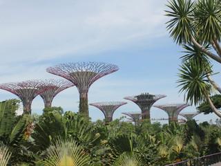 <海洋航行者号新加坡-槟城-兰卡威-普吉岛5晚6天游>多团期 新加坡出港 单船票