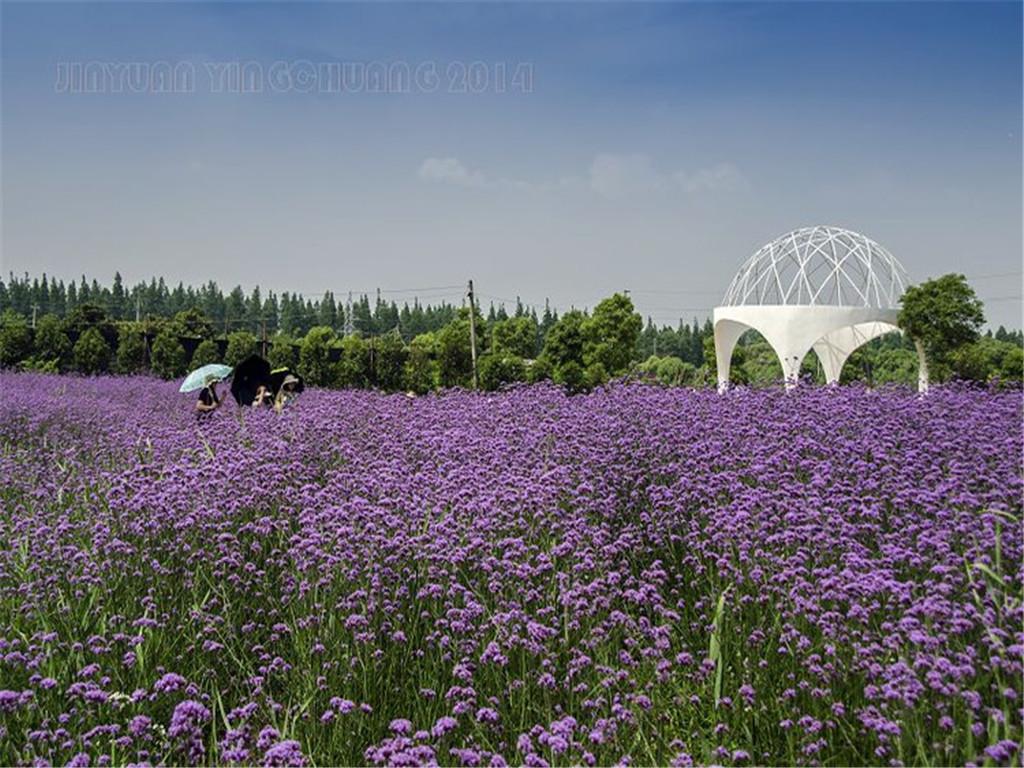 紫海鹭缘浪漫庄园位于上海市崇明岛中北部,崇明东平国家图片