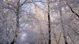 河谷、冬天、艾伯塔省、加拿大_9755
