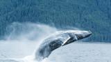 西雅图观鲸_7049_9723