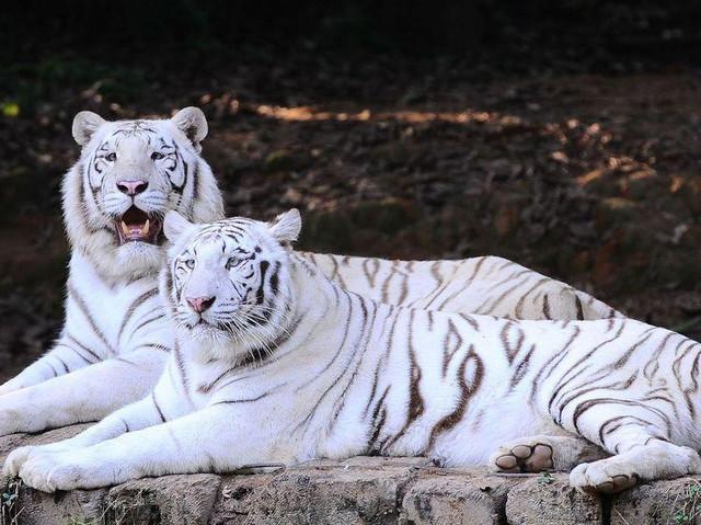广州 珠海 长隆4日3晚跟团游 【玩转长隆】野生动物园