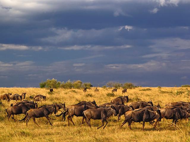 马赛马拉国家野生动物保护区1