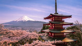 樱花富士山