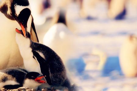 <南极长城马拉松+南极深度探索16日游>旅行加赛事完美结合 途径多国科考站 1AS级抗冰邮轮 麦哲伦探险号 全程中文领队随团