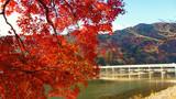 京都岚山公园秋景