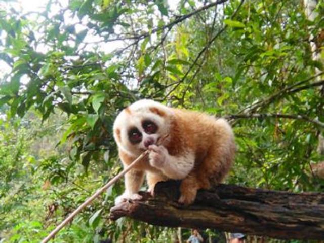 西双版纳-曼听公园3晚4日游 雨林时代 野象谷 普洱国家森林公园 曼听