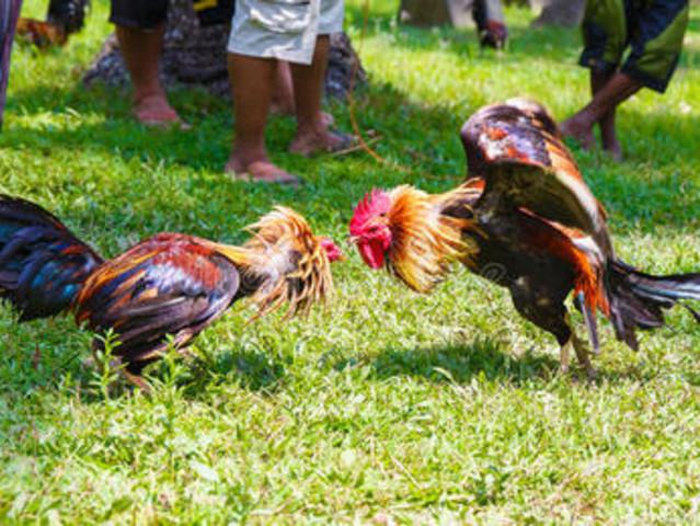<菲律宾长滩岛 Hacienda Maria庄园徒步体验>