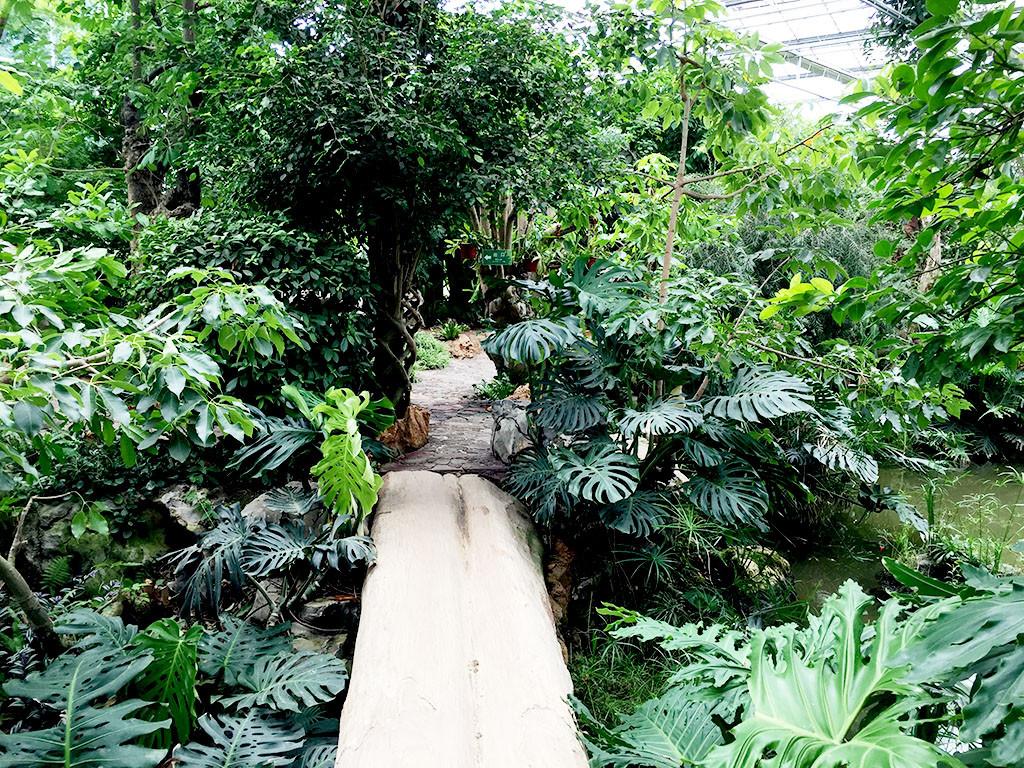 南通洲际绿博园,赏名花绿植