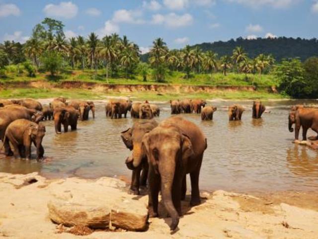 在这里你和憨厚可爱的大象亲密接触,招牌看点就是可以看到成群结队的