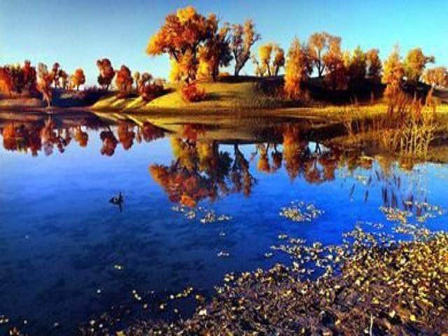 轮台县塔河胡杨林风景区是世界上1200个森林公园中唯一的沙漠胡杨林图片