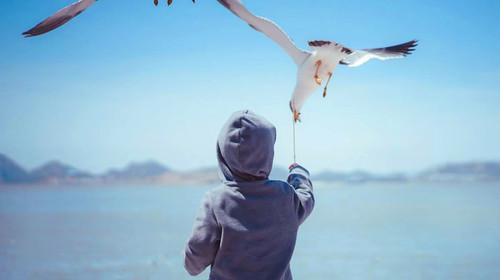 大连老虎滩-旅顺-金石滩-黄金海岸-棒棰岛双飞5日游