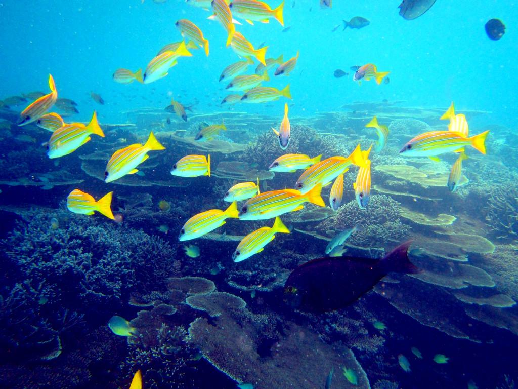 追逐粉海豚,丹岛浮潜,苏梅岛环岛,自由纯玩,精选海边酒店,原生态海鲜