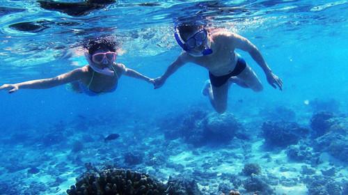 壁纸 海底 海底世界 海洋馆 水族馆 桌面 500_280