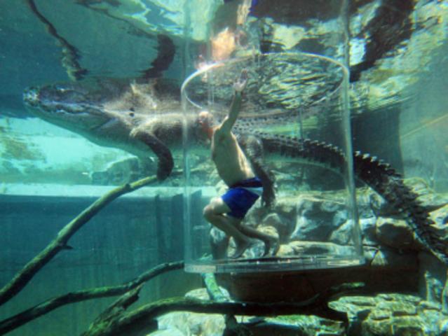 公园集中了大量澳大利亚的咸水鳄鱼,成为世界上最大的爬行动物展出地