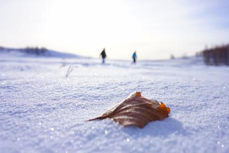 <哈尔滨-呼伦贝尔大草原-额尔古纳-根河-满洲里双卧6日游>2人起订,驯鹿文化,温泉泡汤,冷极点,2H滑雪体验,特色铁锅炖