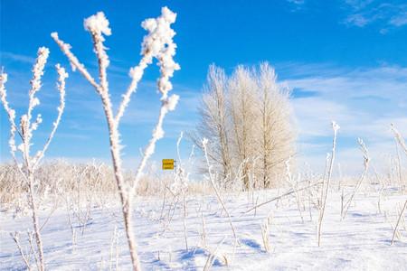 <哈尔滨-呼伦贝尔大草原-额尔古纳-根河-满洲里7日游>2人起订,冷极点,冰雪欢乐园,驯鹿文化,2H滑雪体验,骑马体验,温泉泡汤