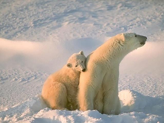 抵达后,前往【极地动物园】,这里饲养