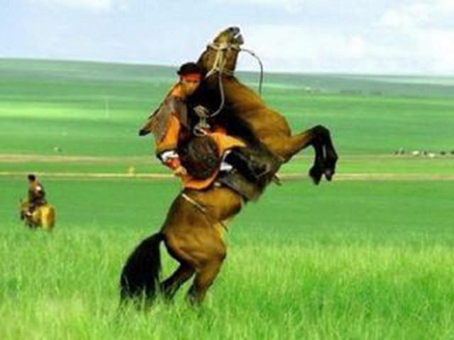 壁纸 草原 动物 马 骑马 桌面 640_480
