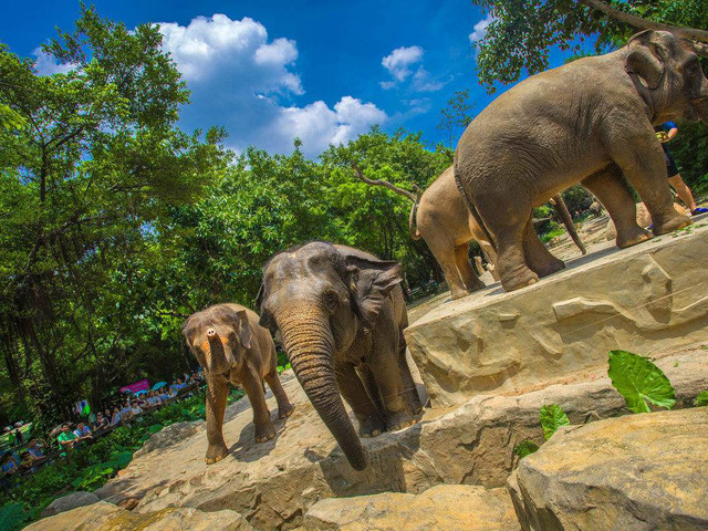 广州长隆-野生动物园-欢乐世界-飞鸟乐园三日游 亲密考拉 爸爸去哪儿