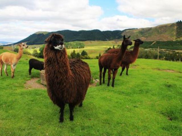 近距离接触各种可爱的动物,登上全天候,全地形的牧场观光车进行一个