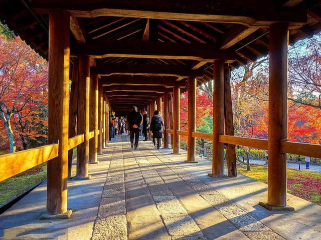 -惠那峡-富士山-东京观漫天美食婆娑飞舞增游北京红叶的形容一句话图片