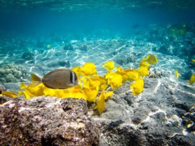 国际5星海边别墅私人沙滩酒店2晚,全程0自费,佛吉水舞,斯米兰群岛