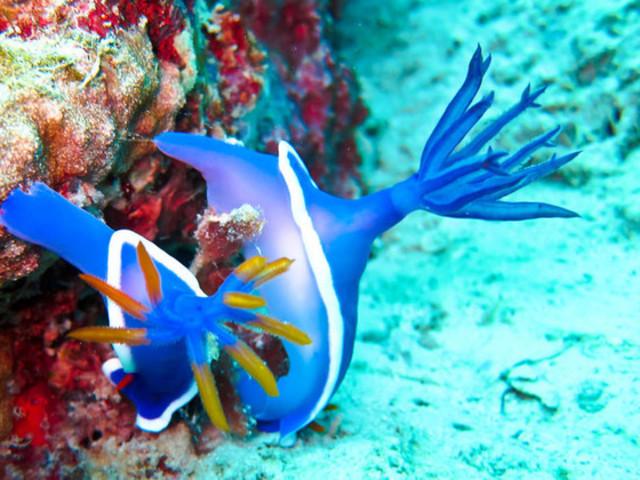 仙本那海底世界