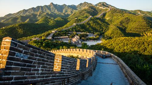 北京牛1的头图