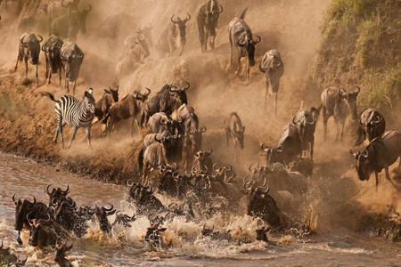 [春节]<坦桑尼亚+肯尼亚+埃塞俄比亚10-11天游>动物发烧友专属定制/升级越野车SAFARI/360度玩转塞伦盖提/马赛马拉/恩戈罗火山