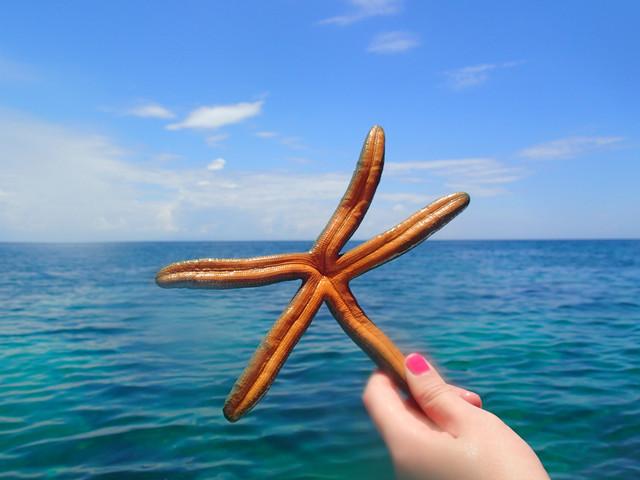 <仙本那 伊丽莎白;海洋公园一日游>纯玩无购物 体验别样美景 可搭配 海洋公园+海底漫步