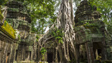 Roots of a strangler fig tree overtake the stone structure of Ta Prohm, in the crumbling temple complex of Angkor Wat, Cambodia