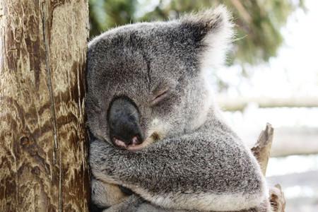 <澳大利亚-凯恩斯-墨尔本10日游>网红邦迪海滩/悉尼大学/蕾拉小镇/大堡礁/贵族高尔夫/喂塘鹅/直升机/吉普森台阶/2晚5星酒店